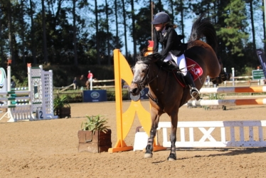 Show pony and Rider Jumping down