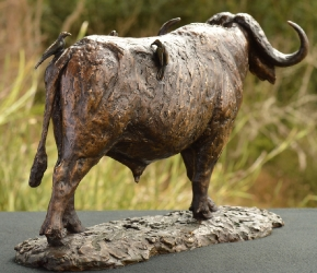 Buffalo Bull with Oxpeckers