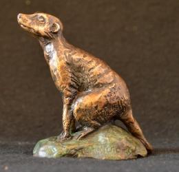 Meerkat mini 8