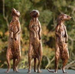 Neighbourhood Sentries - Meerkats