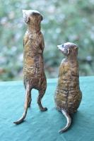 Neighbourhood Watch - Meerkats