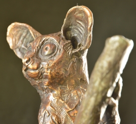 Night Watch - Bushbaby