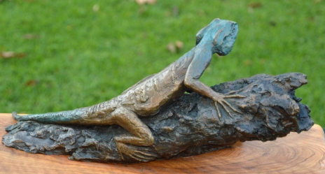 Southern tree agama