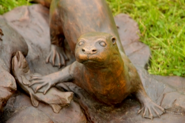 Spotted-necked otters - life-size