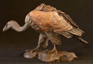 Cape Vulture - Mini