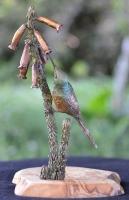 Orange-Breasted Sunbird