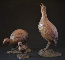 Swainson Spurfowl (Franklin)