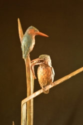 King Fishers 4