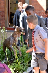 Whippet for WHPS School