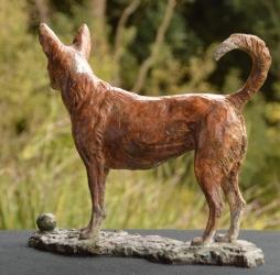 Basenji Dog
