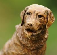 Labrador - Old Friend