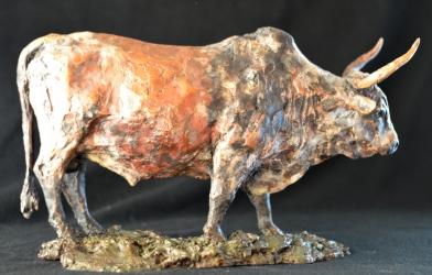 Nguni Bull