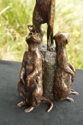 Meerkats - special edition