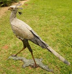 Secretary Bird 2 - Life Size
