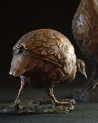 Swainson Spurfowl (Franklin)