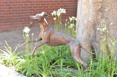 Whippet for WHPS school - SOLD