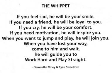 Whippet for WHPS School